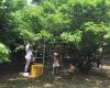 シェアスペース_果樹園