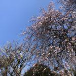 3月3日は【地震対策ワークショップ】